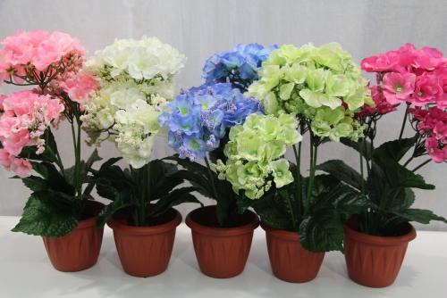 Цветы в горшках каталог